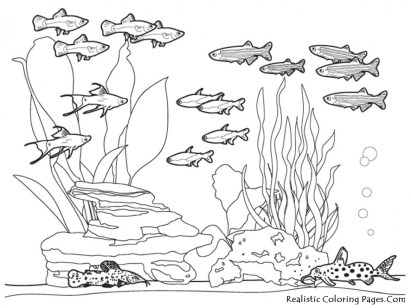 Ocean Coloring Pages for Kids 73bsl