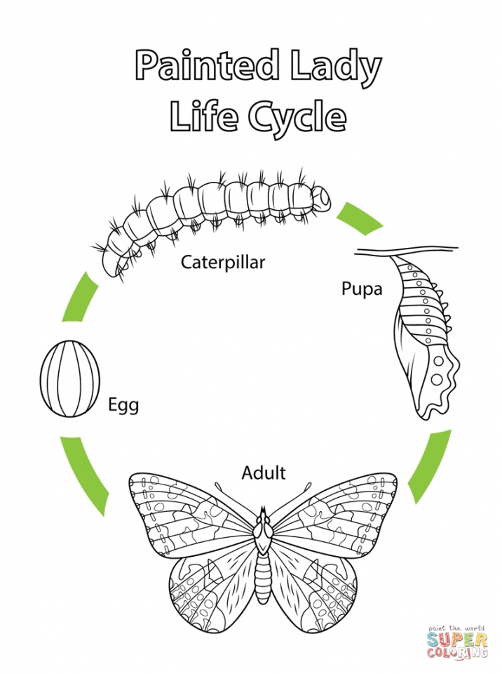 Get This Printable coloring pages butterfly life cycle 9021k