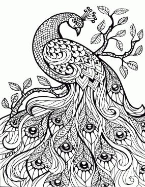 Adult Coloring Pages Animals Peacock 1