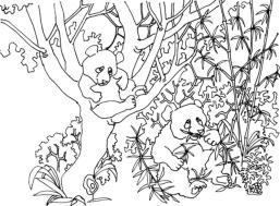 Panda Coloring Pages for Grown Ups