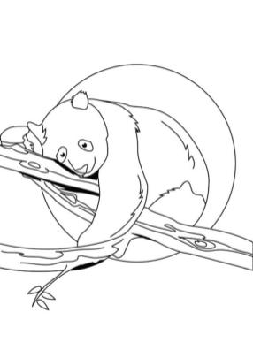 Panda Sleeping on a Tree Branch Coloring Page