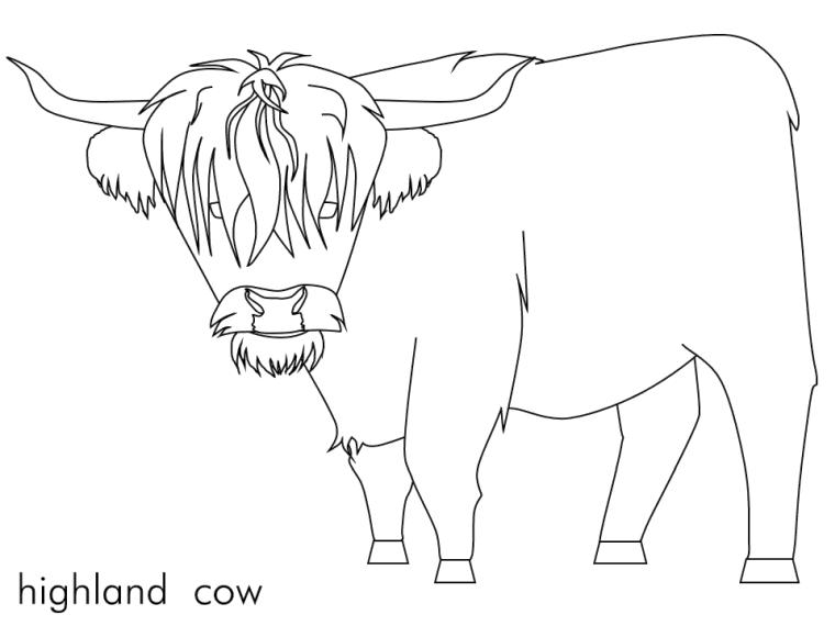 Cow Coloring Pages for Preschoolers Scotland Cow Is Hairy