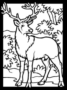 Deer Coloring Pages Free Printable Buck Is a Male Deer