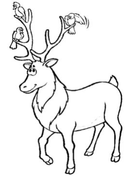 Deer Coloring Pages Free Printable Deer Is Best Friends with Birds