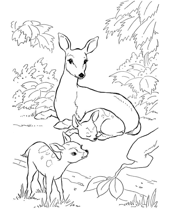 Deer Coloring Pages Free Printable Mother Deer Taking Care of Her Babies