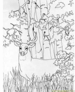 Deer Coloring Pages Online Strong and Proud Male Deer in the Wild