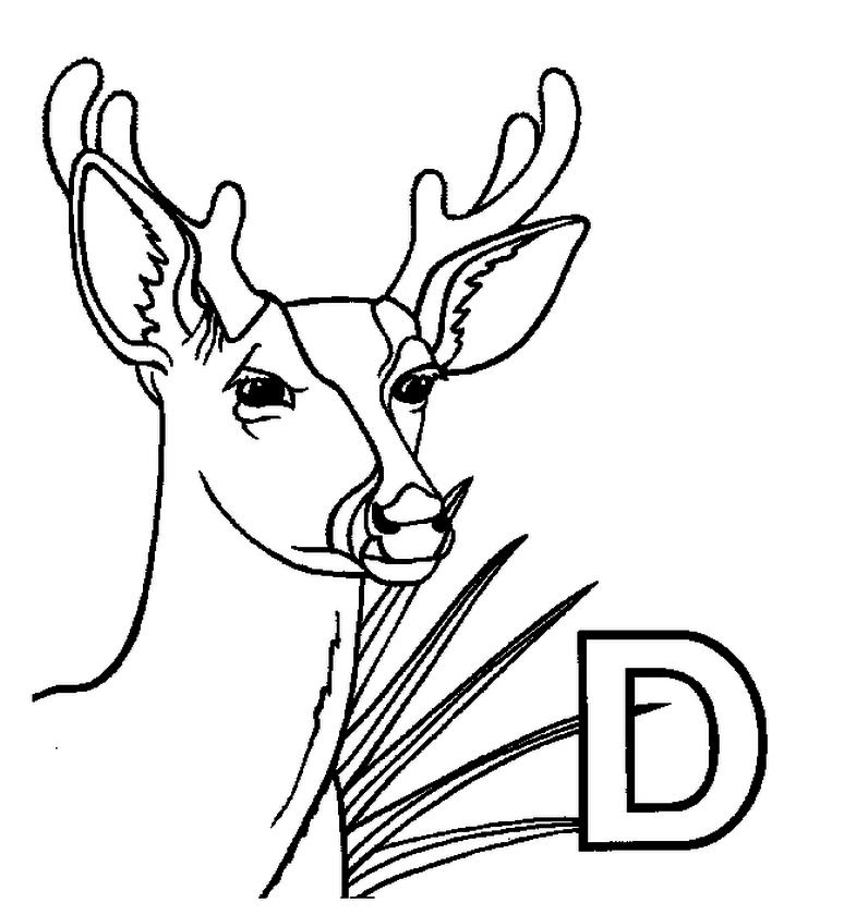 Deer Coloring Pages for Kids D Is for Deer