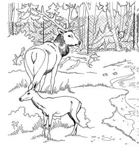 Deer Coloring Pages for Kids Two Deers Inside a Cage