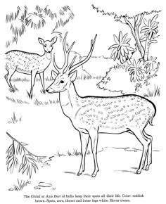 Deer Coloring Pages to Print Axis Deer Drawing
