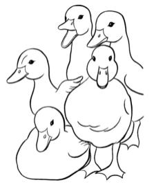 Duck Coloring Pages A Lot of Ducks Quaking