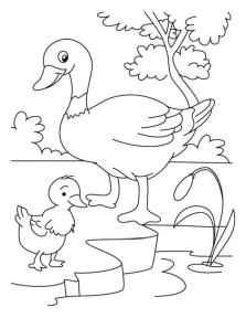 Duck Coloring Pages Duck Chick and Her Mom