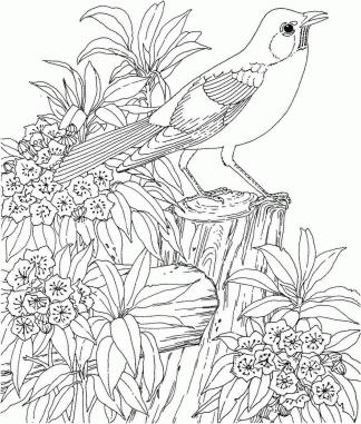 Spring Adult Coloring Pages Bird and Blooming Flowers in Spring