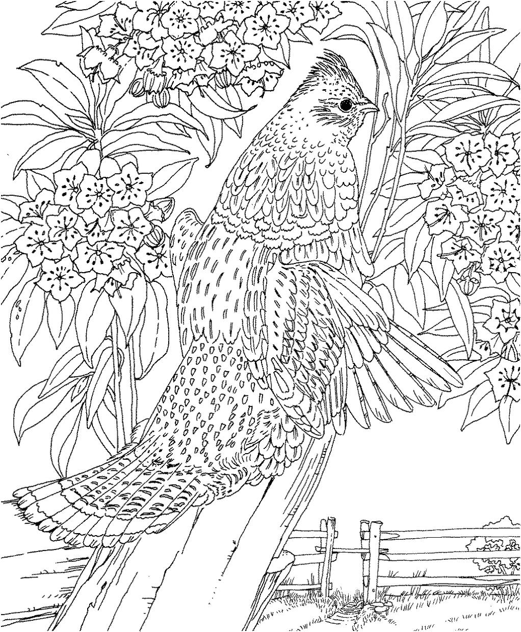 Hard Coloring Pages Realistic Bird Drawing