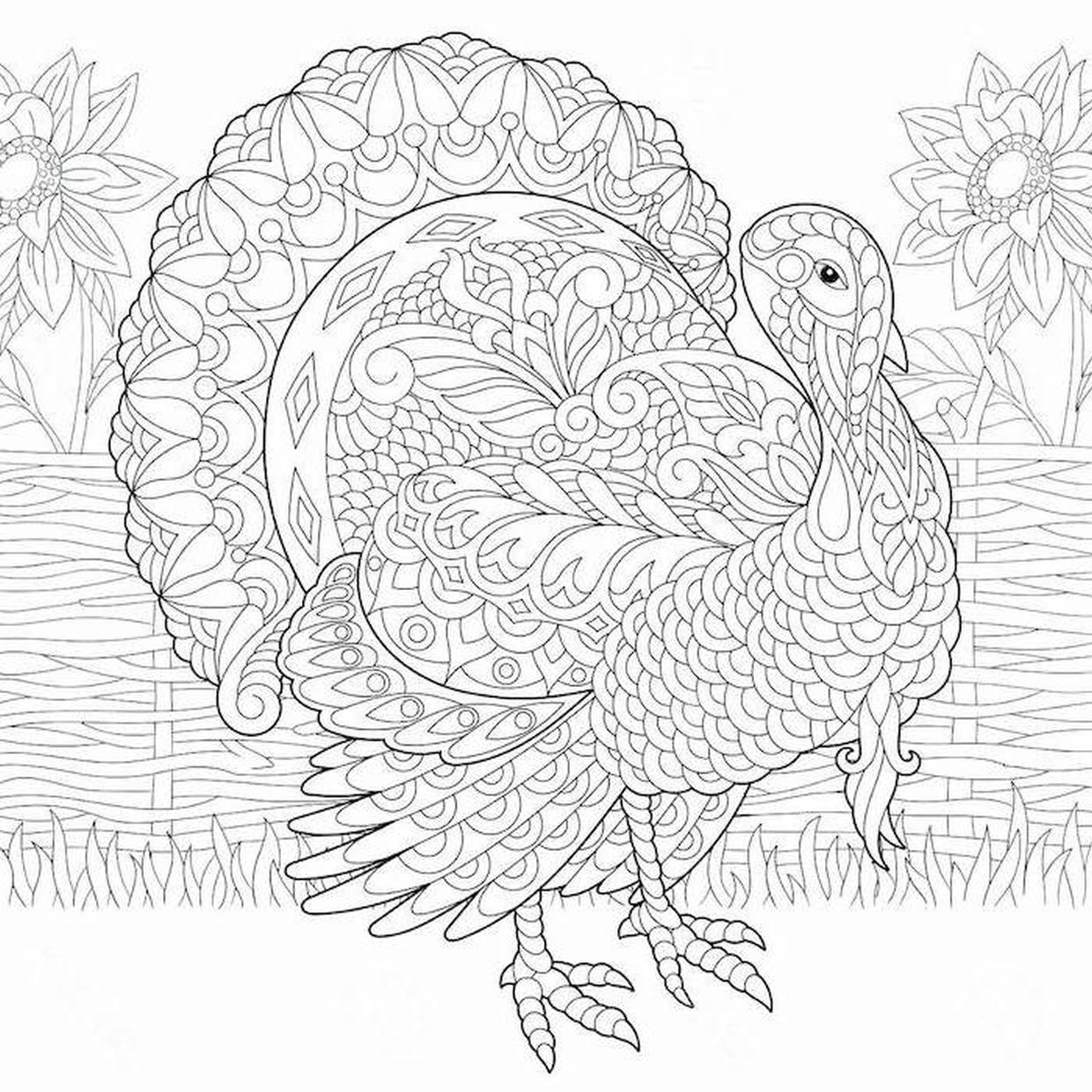 Thanksgiving Coloring Pages for Adult Turkey Zentangle Art