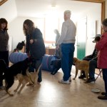 play time in dog class