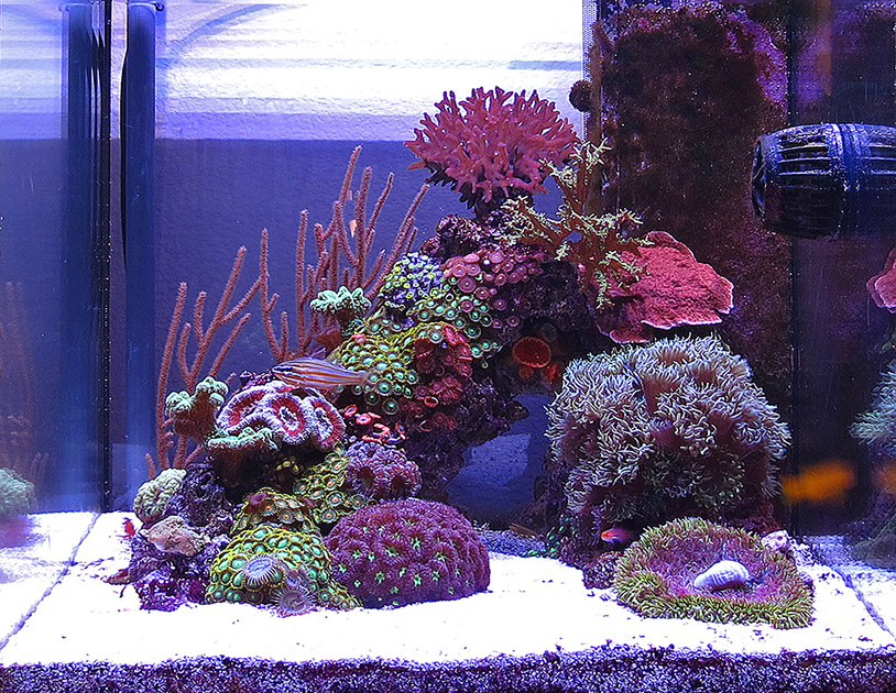Aquascaping The Reef Tank, Part 1 Inspiration  Evergreen