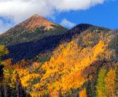 Azimmerman Red Mountain-L1winner1018