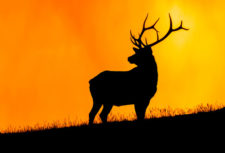 Elk-at-Sunset Kathy--Snead-RCwinner1018