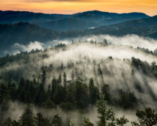 EllenNelson-Morning Fog1R0819