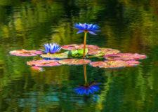KSnead Water-Garden-RCrunup