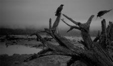 RonPearson raven-bleakscape-Landscape-runup1218