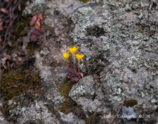 -Dave Edwards - rock-blooms