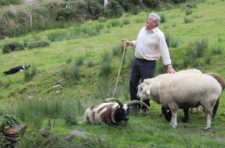 Tina Disorbio-Irish Sheep Herder