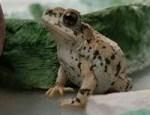 Toad Sanctuary
