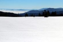 Snow Feild