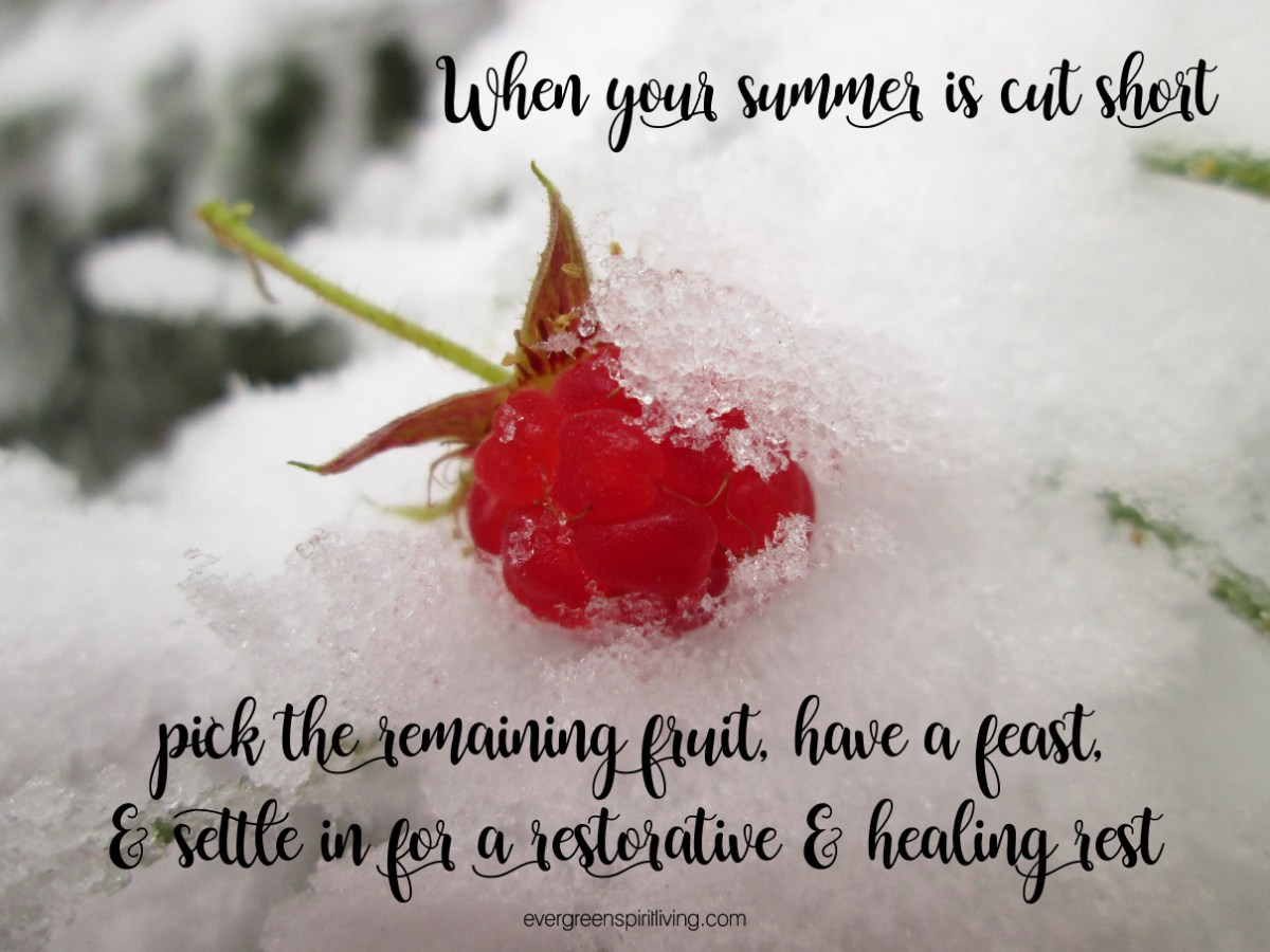 raspberry in snow winter rest encouragement