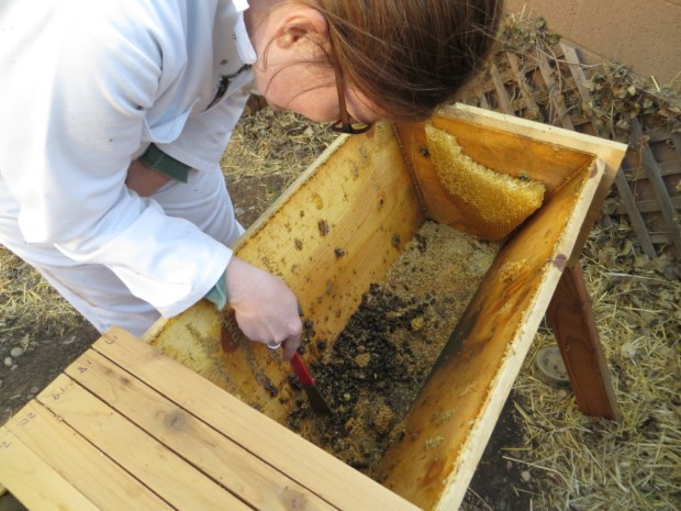 top bar hive inspection