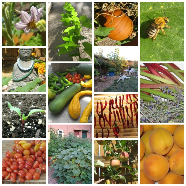 Urban Farm Garden Collage