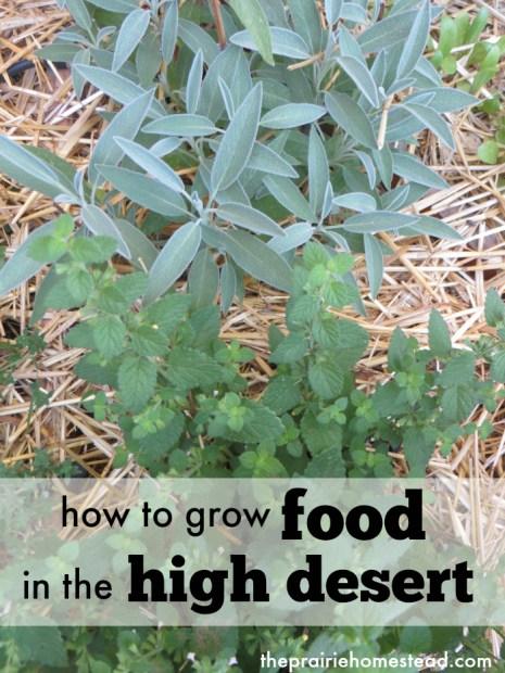 food-high-desert