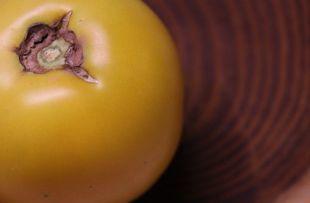 Yellow Taxi tomato