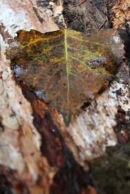 Dew kissed leaf