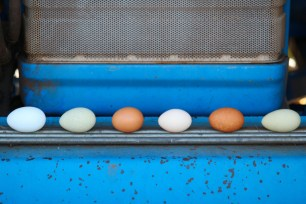 six eggs on a tractor