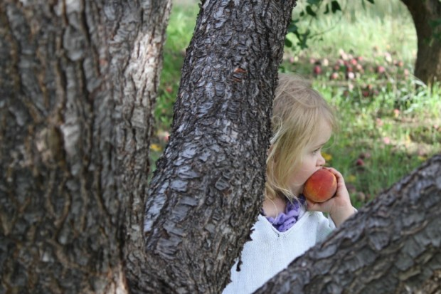 Ember eating peaches