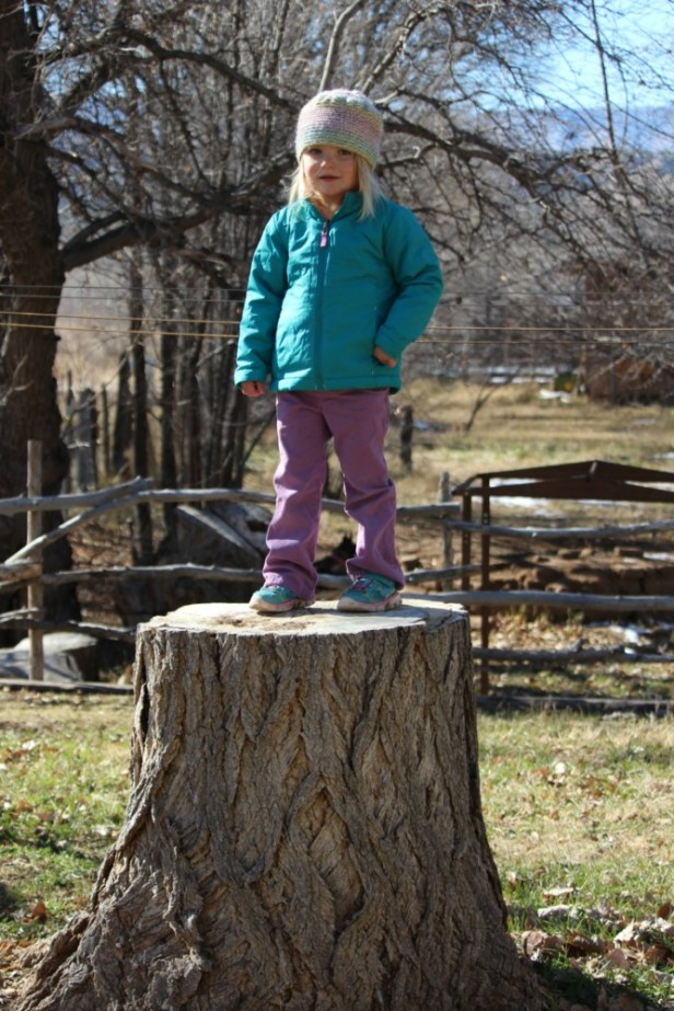 ember-on-top-of-the-big-tree-stump