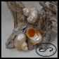 Hermit Crab Shells For Sale Silver Turbo