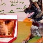 Screenshot_2019-02-11-10-00-01-349_com.miui_.gallery-e1549876786714-150x150 El adiós al perro Guardia Civil que buscó a Diana Quer, Gabriel Cruz o Marta del Castillo conmueve Twitter
