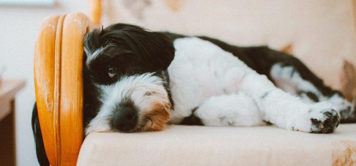 Cinco cosas que los perros odian de los humanos Aquí te descubrimos 5 cosas que los perros odian de los humanos.