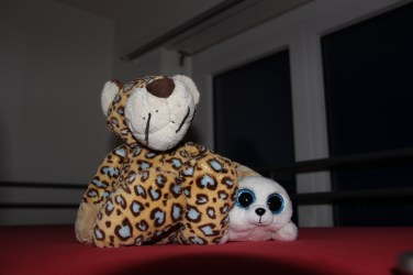 Fluffy Cheetah meets Icy
