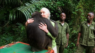 Image: Wounda the Chimpanzee hugging Jane Goodall