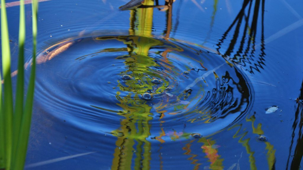 Image: Blue sky reflected in a pond after a pebble is tossed