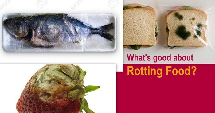 What's good about rotting food