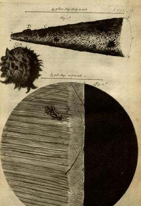 Image: Micrographia 2