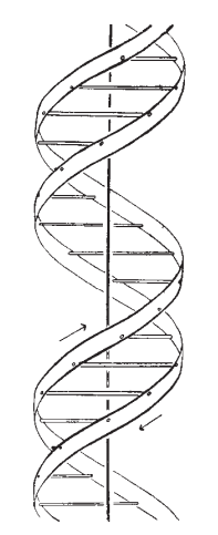 Image: Watson and Crick's 'A Structure for DNA'