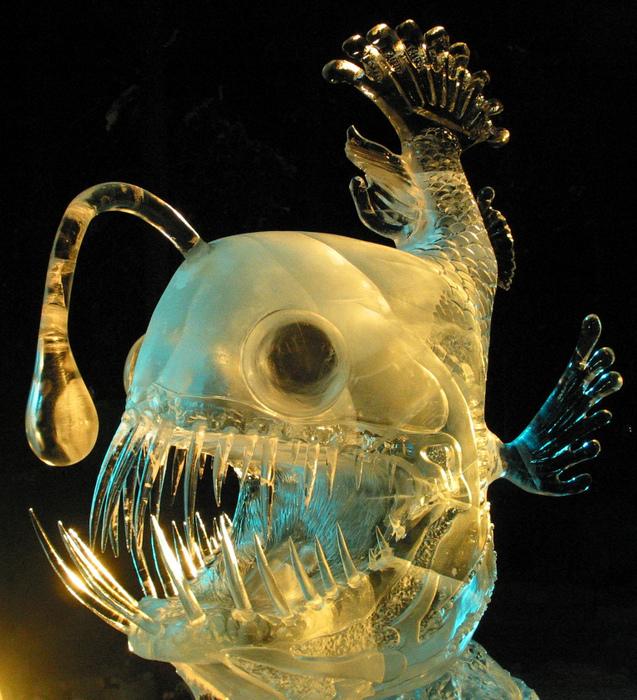 Image: angler fish
