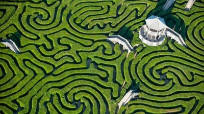 Image: Aerial photograph of hedge maze