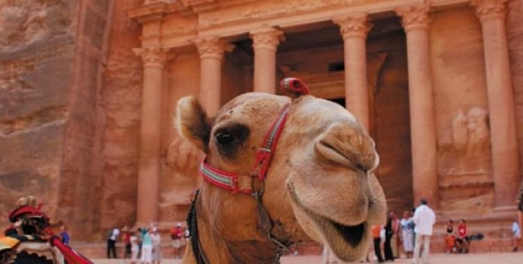 Image: Camel Exploring Petra